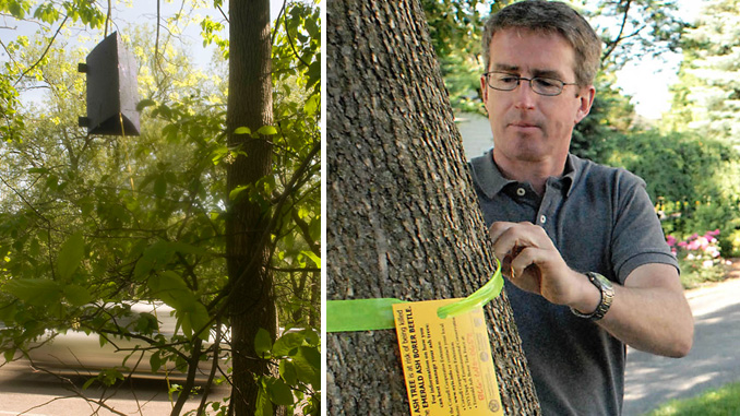 LEFT: An ash borer trap hangs from an ash tree along Kinney Gulf Road in Cortlandville. RIGHT: Jim Maloney, an arborist for National Grid, tags an ash tree along Church Street in 2011.